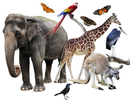 Collage Of Animals Images On White Background 版權商用圖片