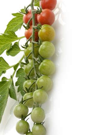 チェリー トマトの白い背景の上のクラスター