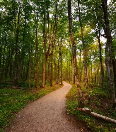 맑은 숲을 통해 경로