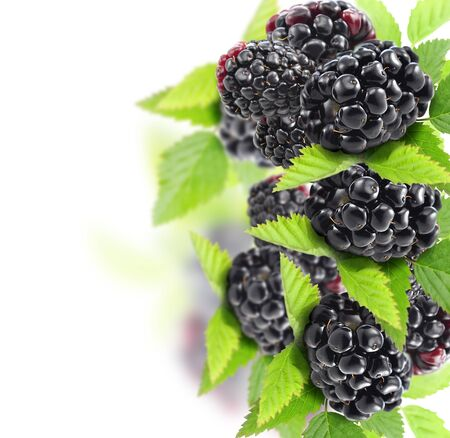 Blackberries With Leaves On White Background Reklamní fotografie