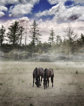 Langscape With Two Horses Grazing Grass Stock Photo - 15656644