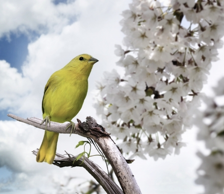 wild canary: Yellow Bird Perching On A Branch Stock Photo