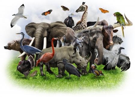 Een collage van wilde dieren en vogels