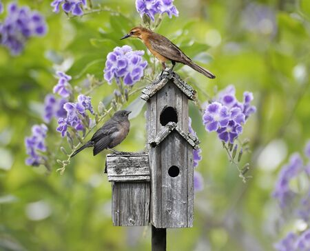 Femaile Black Bird And A Baby Bird Perching On A Bird House photo