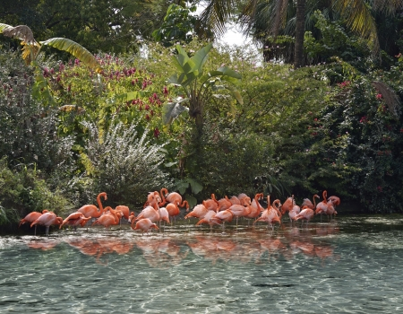 Pink Flamingos In A Tropical Pond Imagens