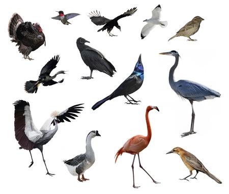 Wild Birds Collection On White Background