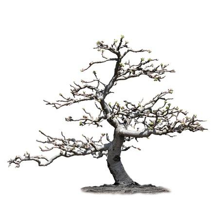 ikebana: Apple Tree In The Spring Time Stock Photo