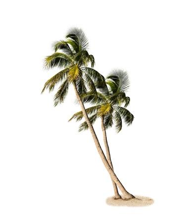 Palm Trees Isolated On White Background 版權商用圖片 - 20908360