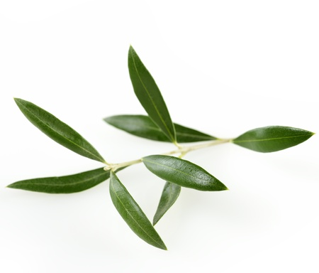 olive green: Green  Olive Branch With  Leaves On White Background