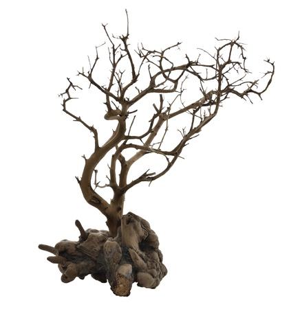 arbol raices: Árbol seco con raíces aisladas en blanco Foto de archivo