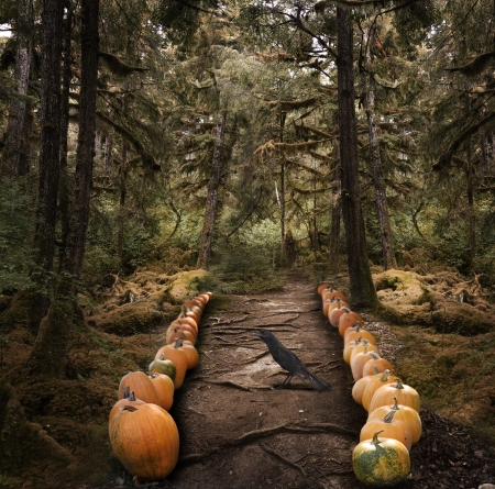 halloween pumpkins: Horror Background With  Spooky Trees And  Pumpkins  Stock Photo