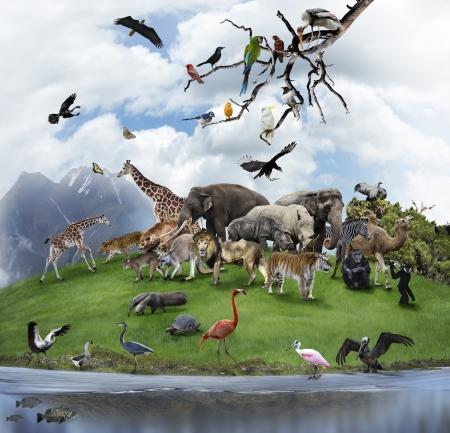 야생 동물과 새와 자연의 콜라주