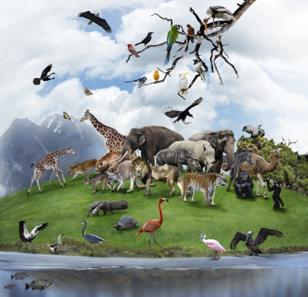 group of animals: Nature Collage With  Wild Animals And Birds