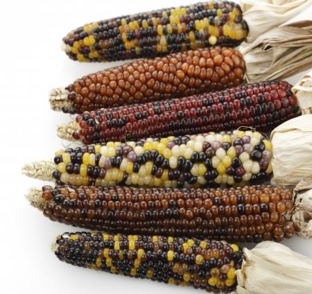 planta de maiz: Colorido Ma�z indio en el fondo blanco Foto de archivo