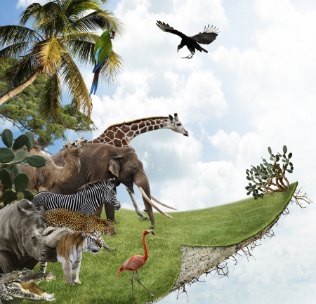 Nature Concept With Wild Animals