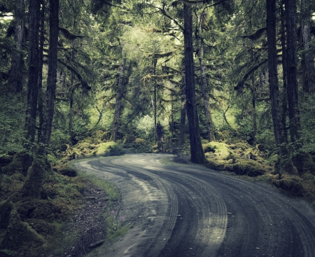 dirt road: Dirt Road In A Rain Forest Stock Photo