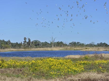 Wetlands,Circle B Bar Reserve photo