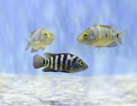 Colorful Fish Swimming In Aquarium photo
