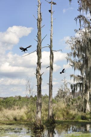 Florida Wetlands In Circle B Bar Reserve photo