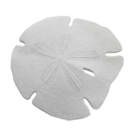 Sand Dollar Sea Shell Isolated On White Background  Stockfoto