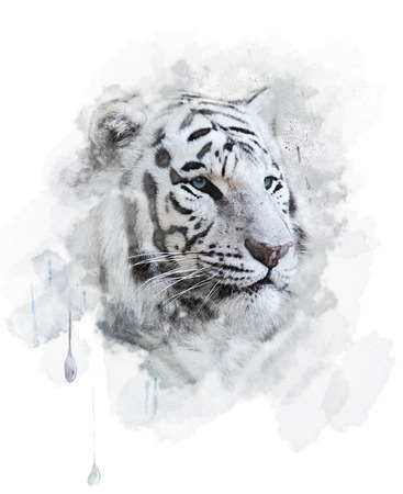 White Tiger Portrait. Digital Painting