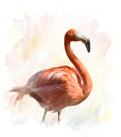 Watercolor Digital Painting Of Flamingo 版權商用圖片
