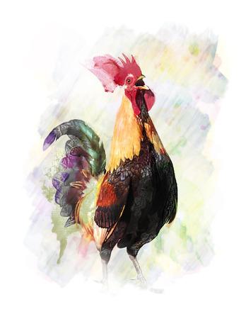 다채로운 닭의 수채화 디지털 회화 스톡 콘텐츠