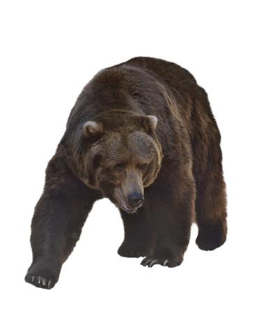 Aquarel digitale schilderij van Grizzly Bear Geïsoleerd Op Witte Achtergrond