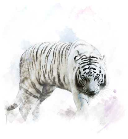 Watercolor Digital Painting Of White Tiger Portrait Imagens