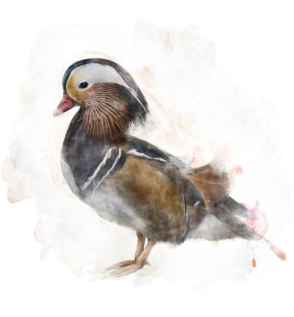Watercolor Digital Painting Of  A Mandarin Duck