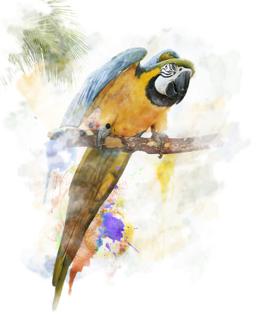 Watercolor Digital Painting Of  Colorful Parrot photo