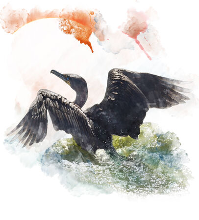 Watercolor Digital Painting Of  A Double-crested Cormorant