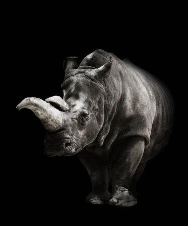 Portrait Of A Rhinoceros On Black Background