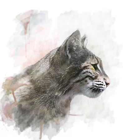lince: Pintura Acuarela Digital De Bobcat Foto de archivo