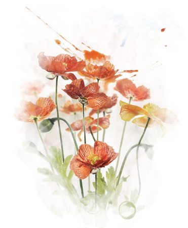 Watercolor Digital Painting Of  Red Poppy Flowers
