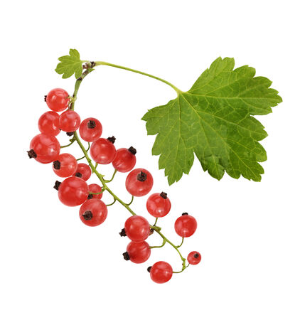 Red Currant With Leaves, Isolated On White Background  photo