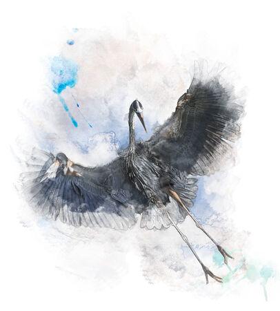 blue heron: Watercolor Digital Painting Of  Great Blue Heron In Flight Stock Photo