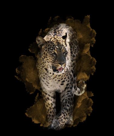 black leopard: Watercolor Digital Painting Of  Leopard On Black Background