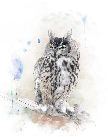 Watercolor Digital Painting Of   Perching Owl