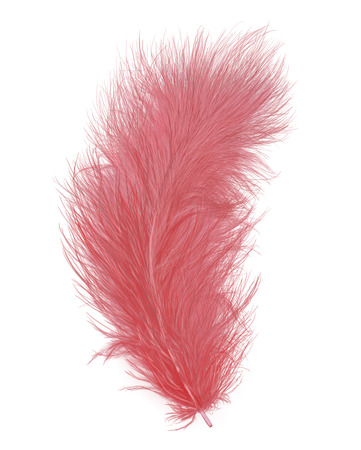Pink Feather Isolated On White Background