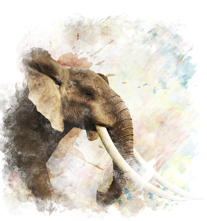 象のデジタル水彩画 写真素材