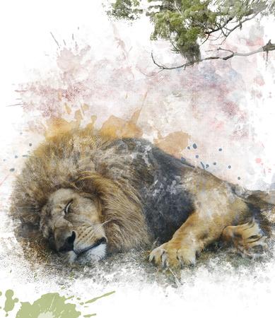 Watercolor Digital Painting Of Sleeping Lion