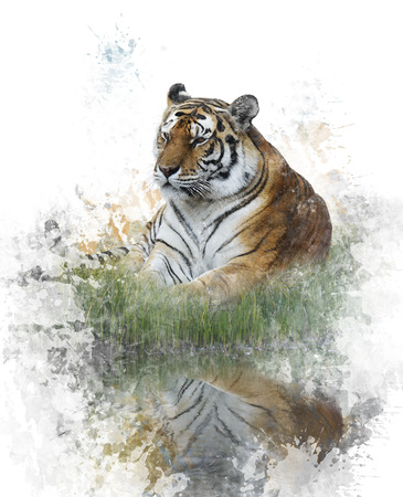 Watercolor Digital Painting Of Tiger Imagens