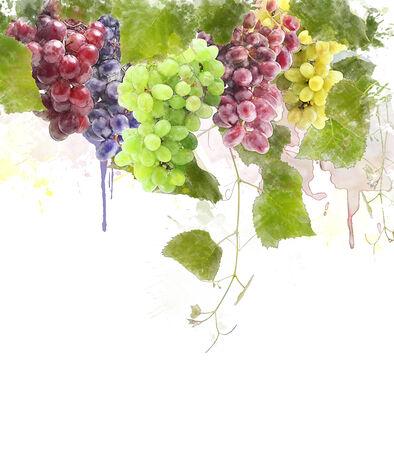 잎 포도의 수채화 디지털 회화 스톡 콘텐츠