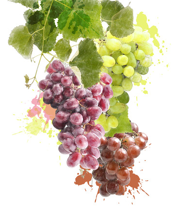 Watercolor Digital Painting Of Grapes With Leaves
