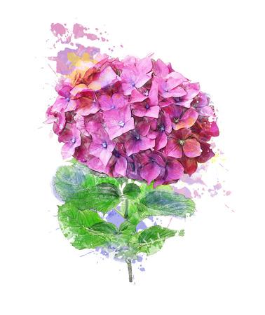 Watercolor Digital Painting Of Hydrangea Flower