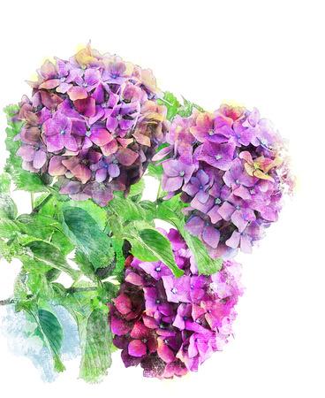 flores moradas: Pintura digital de la acuarela de flores de Hortensia Foto de archivo