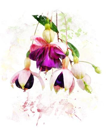 flores fucsia: Pintura de la acuarela digital de color rosa y morado fucsia Flores Foto de archivo