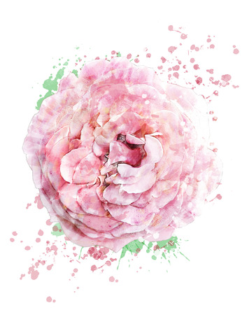 Watercolor Digital Painting Of  Pink Rose