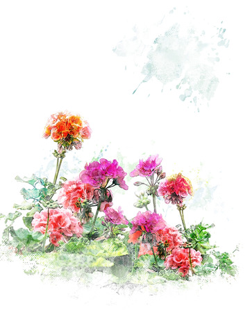 Watercolor Digital Painting Of Colorful Geranium Flowers Stock Photo